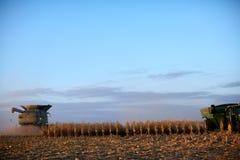 Syndykata żniwiarz zbiera kukurydzy przy półmrokiem zdjęcie stock