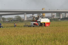 Syndykata żniwiarz zbiera ryż na polu Zdjęcie Stock