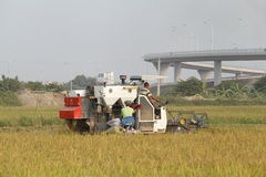 Syndykata żniwiarz zbiera ryż na polu Obraz Stock