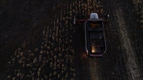 Syndykata żniwiarza żniwa kukurydzana uprawa przy nocy polem zbiory wideo