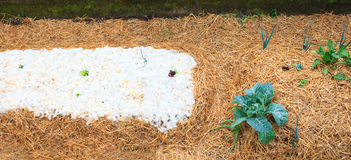 Synergistic vegetable garden Stock Image