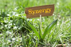 Synergy. On wooden sign in garden with white spring flower Stock Photography