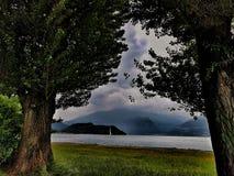 Synklin drzewa Zdjęcie Stock