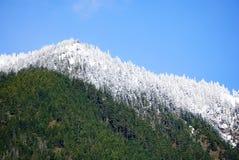 Synlig snowline på hög höjd längs den Elwha floden royaltyfri fotografi