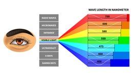 Synligt ljust spektrum Färgvåglängd som märkas av det mänskliga ögat Elektromagnetiska vågor för regnbåge bildande skola stock illustrationer
