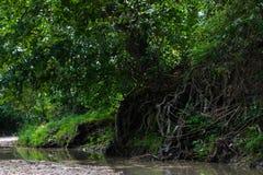 Synligt rotar i floden Arkivbilder