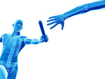 Synligt skelett vektor illustrationer