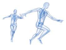 Synligt skelett royaltyfri illustrationer