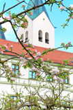 Synligt tecken av våren Royaltyfri Fotografi