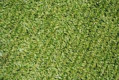 Syntethic green grass Royalty Free Stock Photos
