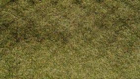 Syntetiskt gräs Royaltyfri Bild