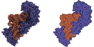 Synthetase Aminoacyl -aminoacyl-tRNA molecule Stock Foto