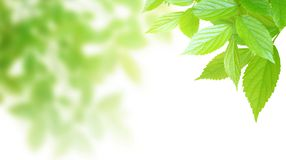 Synthetic background image of foliage leaf Stock Image