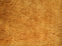 Synthetic fur texture background Stock Photography