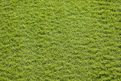 Synthetic grass Royalty Free Stock Photo