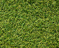 Synthetic grass Stock Images