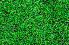 Synthetic grass Stock Photography