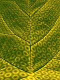 Synthetic Photosynthesis Stock Photography