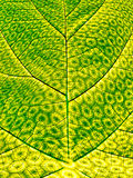 Synthetic Photosynthesis Royalty Free Stock Photos
