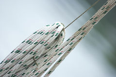 Synthetic rope Stock Photos