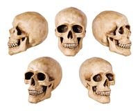 Synthetical skull stock photography