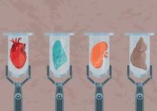 Synthetische Labor-gewachsene menschliche Organe Zukunft von Medizin und von Versetzung stockfotografie