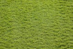 Synthetisches Gras lizenzfreies stockfoto