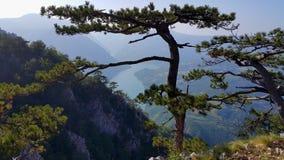 Synvinkel av berget Tara Arkivfoto