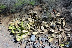 Synvinkel för vävarevisarutsikt, Apache föreningspunkt, Arizona, Förenta staterna Royaltyfria Bilder