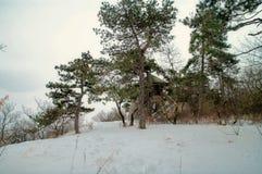 Synvinkel med stora träd Fotografering för Bildbyråer