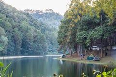 Synvinkelturister som campar i pinjeskog på behållare på evenin Royaltyfri Foto