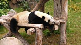 Sypialna panda zbiory