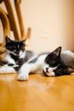 Sypialni koty Zdjęcia Stock