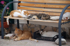 Sypialni koty Obraz Royalty Free