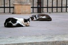 Sypialni koty Obrazy Stock