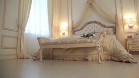 Sypialnia koloru creme brulee zdjęcie wideo