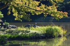 Sypialny żuraw, Tokio Japonia obraz stock