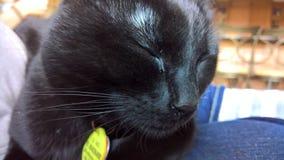 Sypialny czarny kot zdjęcia royalty free