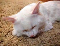 Sypialny imbirowy tomcat doskonalić sen zdjęcie royalty free