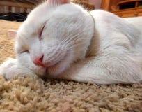 Sypialny imbirowy tomcat doskonalić sen obrazy royalty free