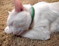Sypialny imbirowy tomcat doskonalić sen obraz stock