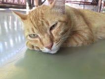 Sypialny kot ilustracji