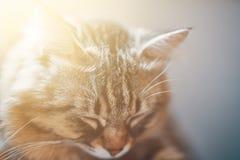 Sypialny kot zdjęcie royalty free