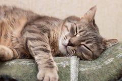 Sypialny kot Zdjęcia Stock