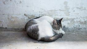 Sypialny kot Zdjęcia Royalty Free