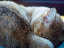 Sypialny kot Obrazy Stock