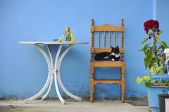 Sypialny kot na krześle pod błękit ścianą obraz royalty free