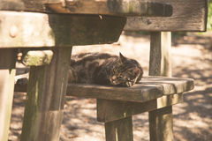 Sypialny kot na starej drewnianej ławce Zdjęcia Stock