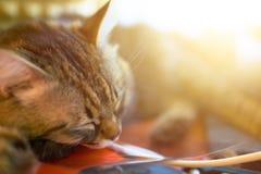 Sypialny kot przy słonecznym dniem zdjęcie stock