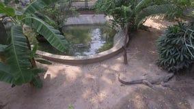 Sypialny krokodyl zbiory